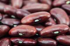 Красная фасоль стоковое изображение