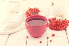 Красная чашка терапевтического травяного чая с ягодой рябины на белом ru Стоковое Фото