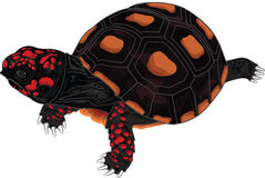 Красная черепаха ноги Стоковые Изображения RF