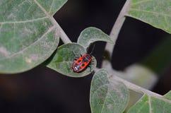 Красная черепашка на зеленых листьях Стоковые Изображения RF