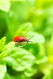 Красная черепашка на саде весеннего времени Стоковые Изображения RF