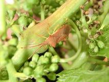 Красная черепашка ноги Стоковая Фотография RF