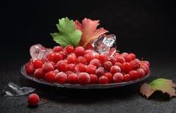 Красная ягода с изморозью и части льда Стоковые Фото