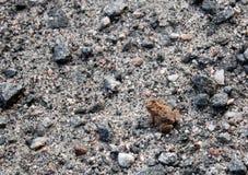 Красная лягушка Стоковые Изображения RF