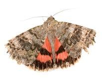 Красная underwing бабочка Стоковое Изображение RF
