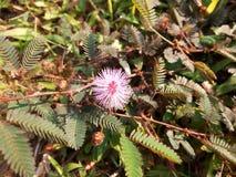Краснея цветок на самой небольшой ветви дерева стоковое изображение rf