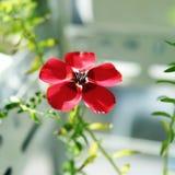 Красное белье Стоковое Фото