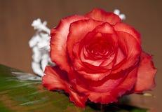 красное Валентайн Стоковая Фотография
