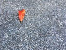 Красное высушенное падение лист на зернистом и каменном поле Классическая поверхностная предпосылка текстуры стоковое изображение