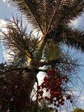 Красное дерево подшипника гайки стоковая фотография