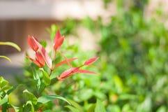 Красное дерево лист с предпосылкой нерезкости стоковое изображение rf