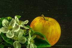 красное желтое яблоко с белыми цветками и листьями зеленого цвета стоковые фото