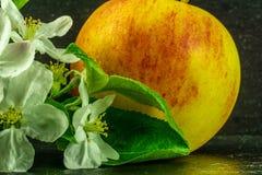 красное желтое яблоко с белыми цветками и листьями зеленого цвета стоковая фотография rf