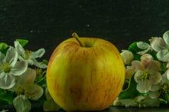 красное желтое яблоко с белыми цветками и листьями зеленого цвета стоковые изображения rf