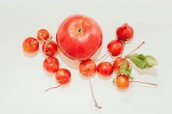 """Красное зрелое 'Ranetka яблони яблок """"на белой предпосылке стоковое фото"""