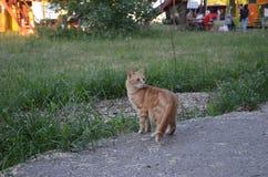 Красное изумление кота в траве стоковое фото rf