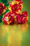 3 красное и желтые розы Стоковое Фото