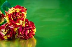 3 красное и желтые розы Стоковое фото RF