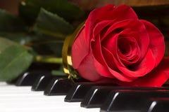 Красное красивое подняло на клавиатуру рояля Стоковые Фотографии RF