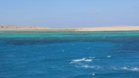 Красное Море дельфина сток-видео
