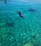 Красное Море дельфина Стоковое Фото