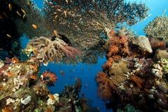 Красное Море жизни морское тропическое Стоковые Фотографии RF