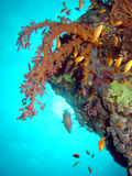 Красное Море кораллов Стоковое Фото