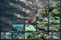 Красное Море морского пехотинца жизни Египета Стоковые Изображения RF