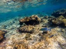 Красное Море рыб коралла Египет стоковые фото