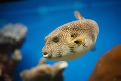 Красное Море рыб Стоковое Изображение