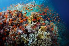 Красное Море стоковое фото