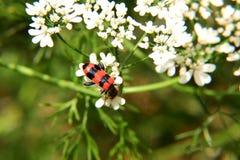 Красное насекомое стоковое фото