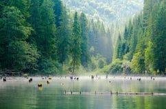 Красное озеро (Lacul Rosu) в Трансильвании Стоковое фото RF