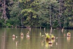 Красное озеро - Lacul Rosu Стоковые Изображения RF