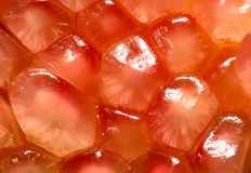 Красное оранжевое гранатовое дерево цвета Стоковое Изображение