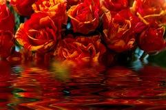 Красное отражение воды желтых роз Стоковое Изображение