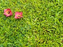 Красное падение цветков на greensward Стоковое фото RF