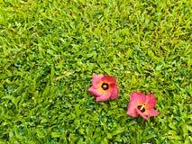Красное падение цветков на greensward Стоковая Фотография RF