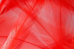 Красное перо Стоковое фото RF