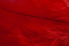 Красное перо Стоковое Изображение