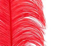 Красное перо Стоковая Фотография RF