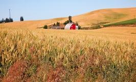 Красное поле пшеницы Palouse амбара Вашингтон Стоковое Фото