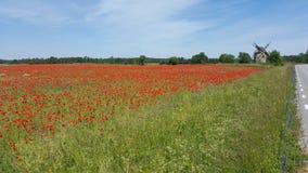 Красное поле мака, покинутая ветрянка Стоковые Фото