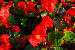 Красное принесенное солнце Стоковые Фотографии RF