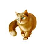 Красное пушистое звероловство кота на белизне Стоковая Фотография