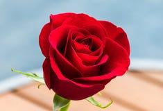 красное романтичное подняло Стоковая Фотография RF