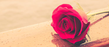 красное романтичное подняло Стоковые Фото
