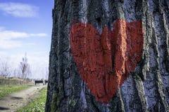 Красное сердце на коре дерева с 2 стендами и голубое небо в задней части Стоковые Фотографии RF