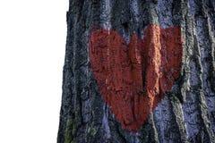 Красное сердце на коре дерева с 2 стендами и голубое небо в задней части Стоковые Изображения