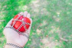 Красное сердце связанное с цепями на любови и роман концепции белой бумаги, концепции валентинки стоковое фото